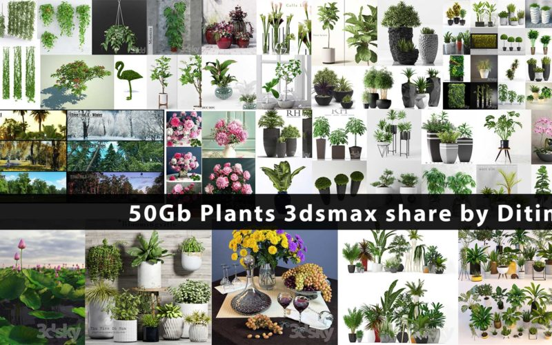 50Gb Plants 3dsmax share by Ditim