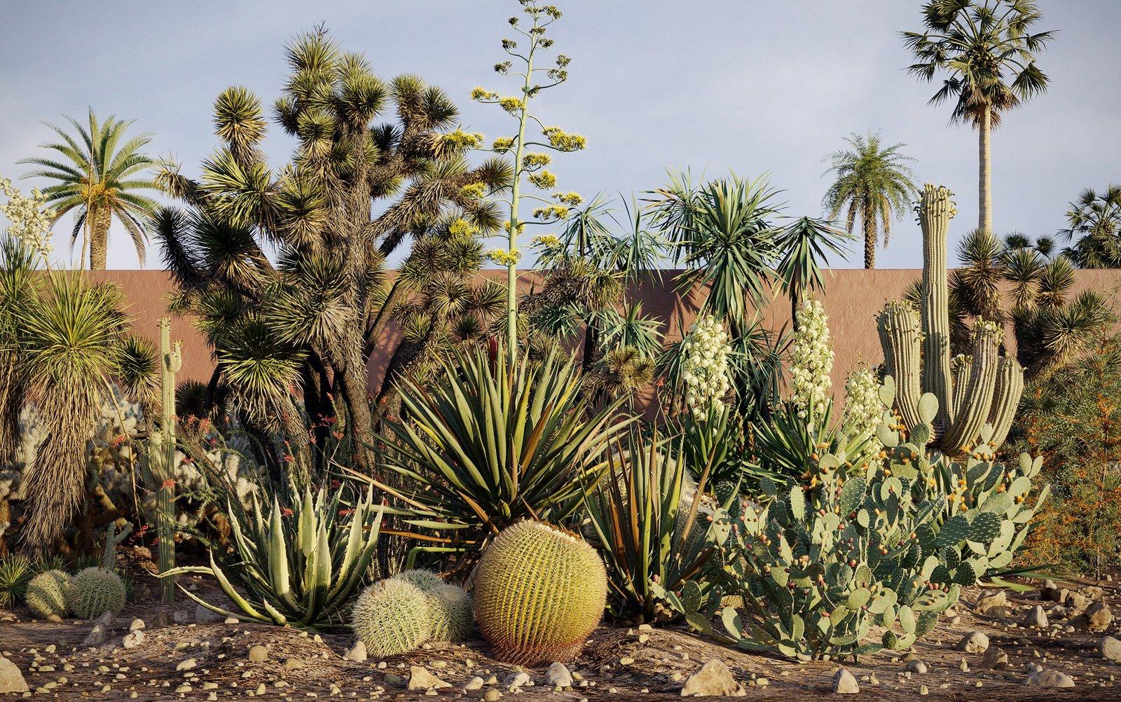 [ 3dsmax ] Maxtree Plant Models Vol 17 | cây xương rồng